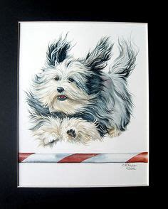 havanese agility havanese on havanese puppies havanese dogs and dogs