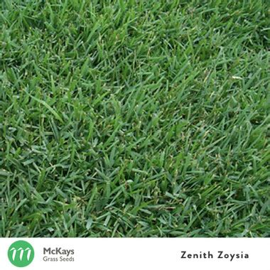 couch grass seeds for sale mckays zenith zoysia grass seed blend