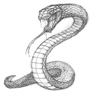 snake sketch turn this into a tattoo by having the tail