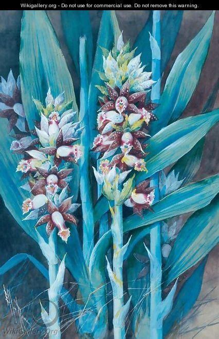 ginger plant marian ellis rowan wikigalleryorg