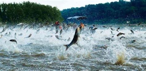 bass boat in brackish water why do some fish jump out of the water quora