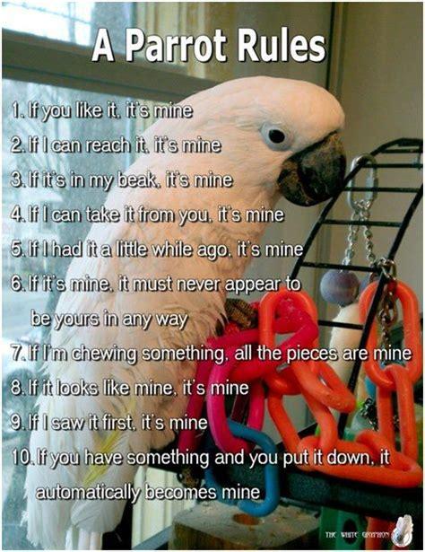 parrot rules httpsfuntimebirdywordpresscomcategory