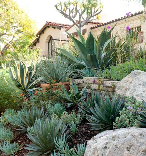 succulents in spain garden design landscaping network