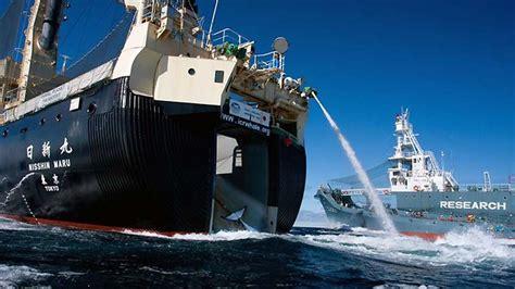 sea shepherd steve irwin sinks japanese whalers halt huntl after sea shepherd ships steve
