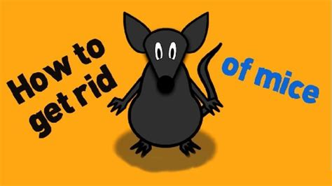 how to get rid of mice in the house how to get rid of mice fast