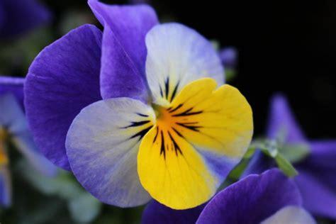 fiori inverno giardino d inverno con fiori e arbusti donnad
