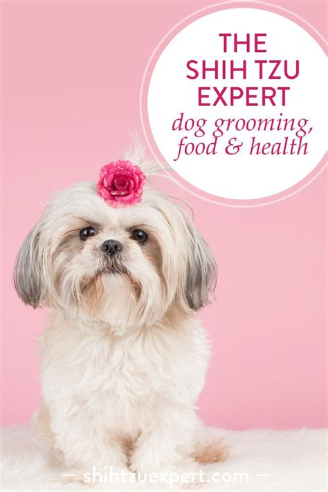 dog haircuts at home 9 best cuts images on pinterest shih tzu hair cut and