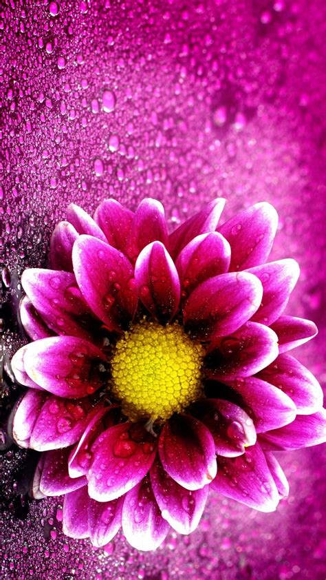 Flower Iphone 3d 1 2018 pink flower wallpaper iphone size 3d iphone wallpaper
