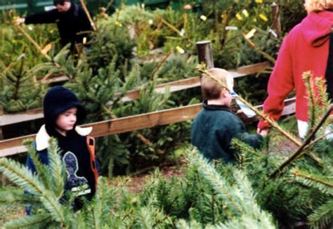 photographs christmas tree farm chesham london