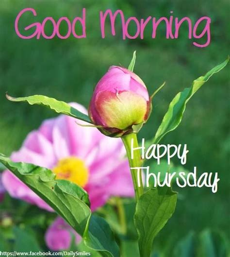 morning thursday images morning happy thursday pictures photos and images