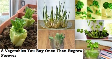 vegetables you can regrow vegetables that you can regrow human n health