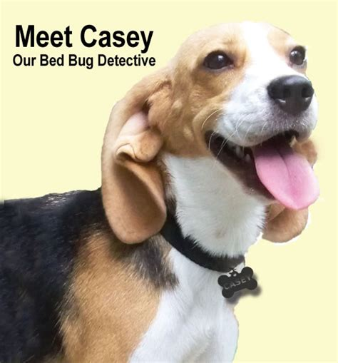 bed bugs on dogs casey key k9 bed bug detection