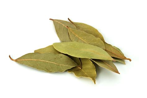 Games To Play In A Dark Room - what are bay leaves