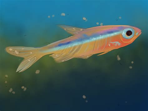 how to care for a how to care for guppies 13 steps with pictures wikihow