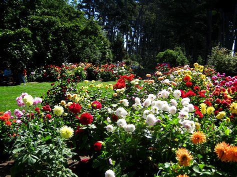 In Garden Of Davis Garden Show