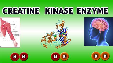 is creatine kinase creatine kinase enzyme clear view