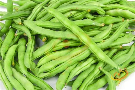 green bean varieties types of green beans