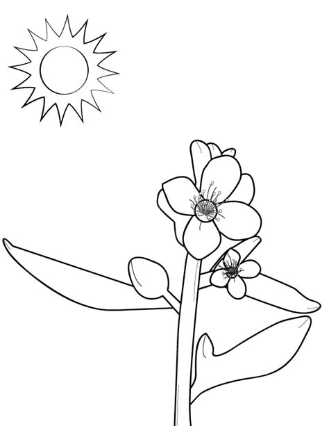 mustard tree coloring page coloring picture of mustard tree coloring pages