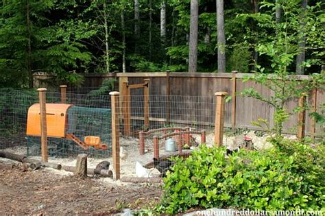 chickens for backyards coupon code raising backyard chickens a new chicken yard for the hens one hundred dollars a month
