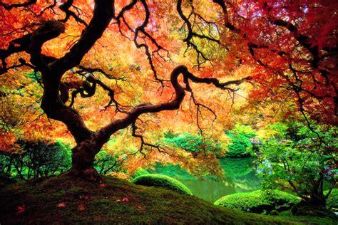 on acid this is what trees look like on acid a pondering mind