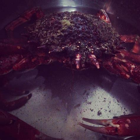 cuisson dormeur cuisson des araign 233 es de mer h 233 l 232 ne