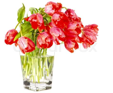 Red Flower Vase Red Tulip Flowers In A Glass Vase Stock Photo Colourbox