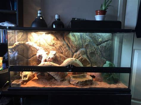 exo terra glass terrarium  bearded dragon bristol