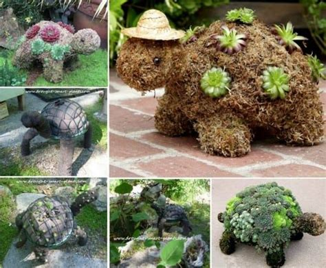 how to make a succulent turtle succulent turtle planter topiary will look cute in your garden