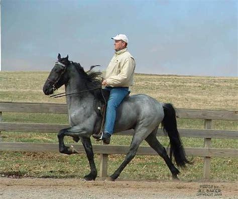 tennessee walker tennessee walker horses walkers gaited