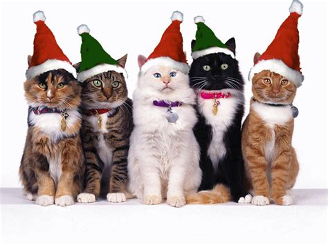 meme center largest creative humor community christmas cats christmas animals cats
