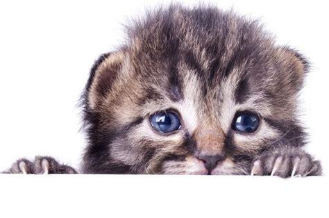 gatto in gabbia le paure dei gatti comportamento