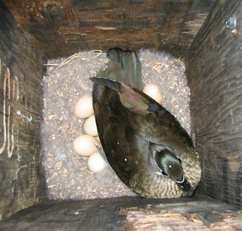 10 000 birds cavity nesting birds of north america and