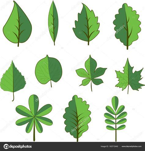 alberi clipart insieme di alberi a foglie caduche albero e foglia