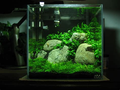 aquascape shrimp tank inspirational aquascape 6 apsa