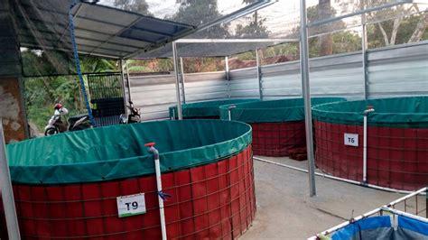 Jual Kolam Terpal Siap Pakai Bandung kolam terpal bulat untuk ikan nila dan gurame kolam terpal