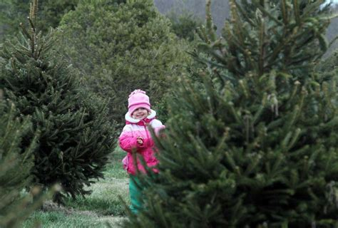 where to cut your own christmas tree on long island newsday