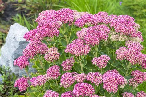 Pflegeleichte Gartenpflanzen by Pflegeleichte Gartenpflanzen Turbotech Co