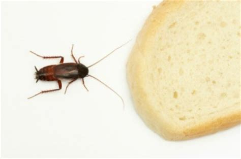 Flying Bugs In Kitchen Pantry by Preventing Pantry Pests Thriftyfun