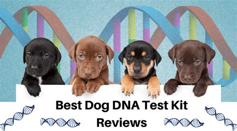 dna test reviews best dna test kit reviews of 2017 pomskies for sale in va