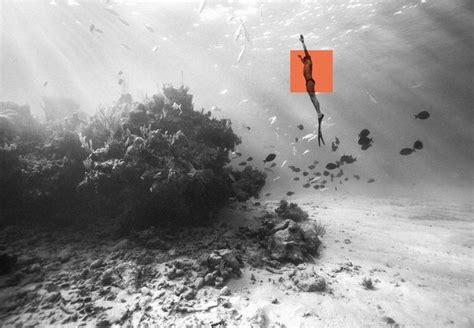 hamilton dive 17 best images about hamilton diving on