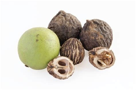 are walnuts bad for dogs is your nuts about nuts the from the bad the dogington post
