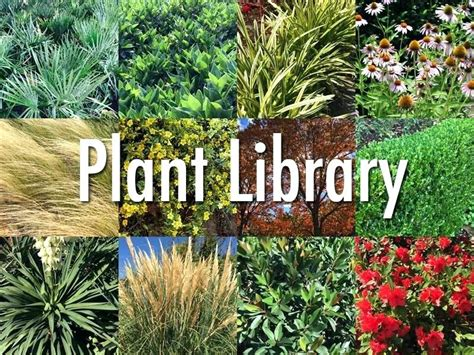 florida landscape plants outdoor goods