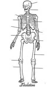 anatomy coloring book bones skeleton gif