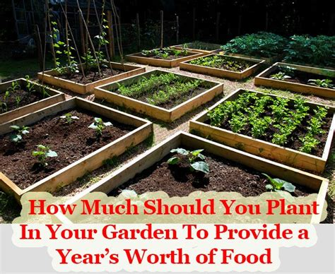 71 Best Diy Home Farming Images On Pinterest Healthy When Should I Start Planting My Vegetable Garden