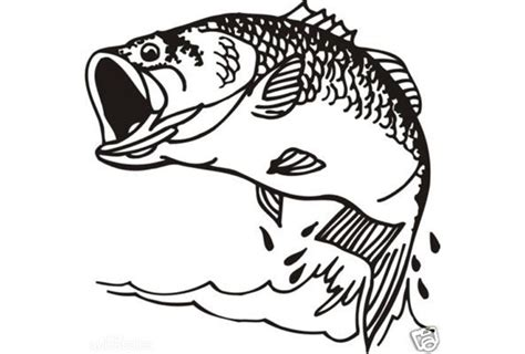 coloring pages bass fish musky coloring page coloring pages of walleye fish