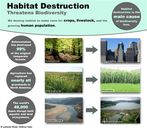 exle of habitat what are some exles of human practices that can change ecosystems socratic