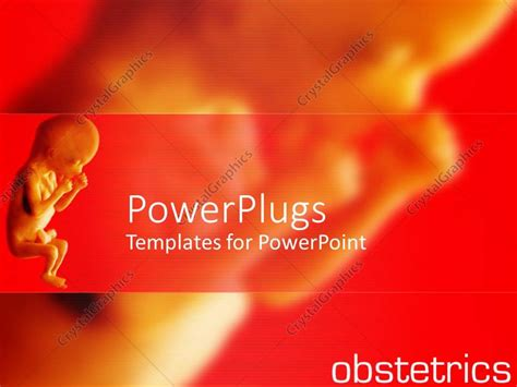 Powerpoint Template Close Up Of Fetus And Fading Fetus On Gynecology Ppt Templates Free