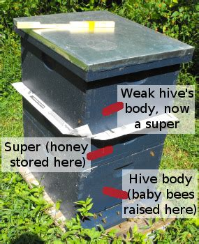 hive union hive union results