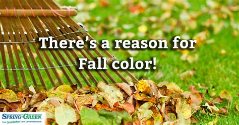 why do leaves change color in the fall why do leaves change color in the fall