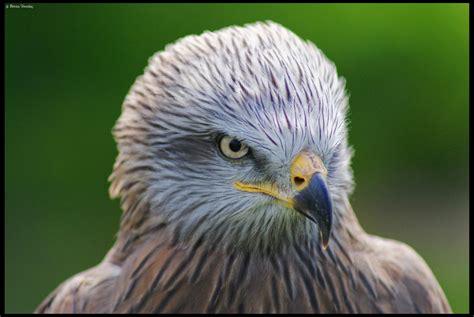 imagenes animales que vuelan aves de las que vuelan slayertxu